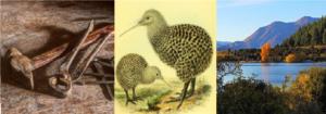 Kiwi start klusbedrijf voor Alkmaar en omgeving
